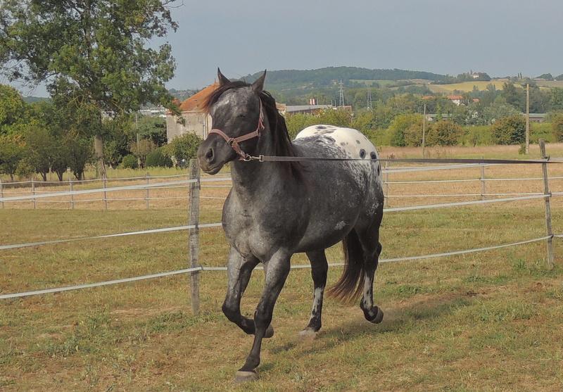 Les chevaux de l'Appaloosa IJ Farm - Page 3 02110