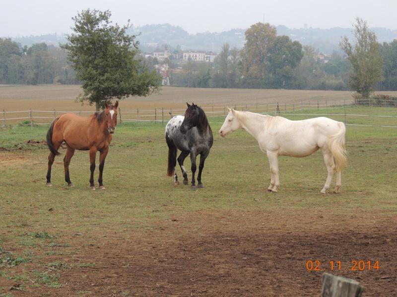 Les chevaux de l'Appaloosa IJ Farm - Page 4 02111