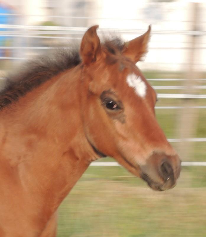Les poulains né à l'Appaloosa IJ Farm - Page 2 02210