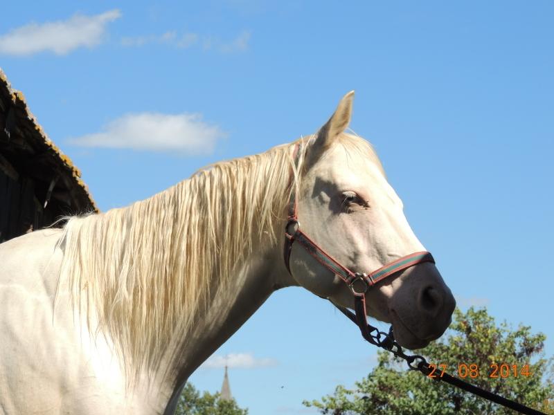 Les chevaux de l'Appaloosa IJ Farm - Page 3 02211