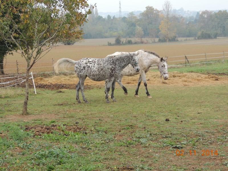Les chevaux de l'Appaloosa IJ Farm - Page 4 02213