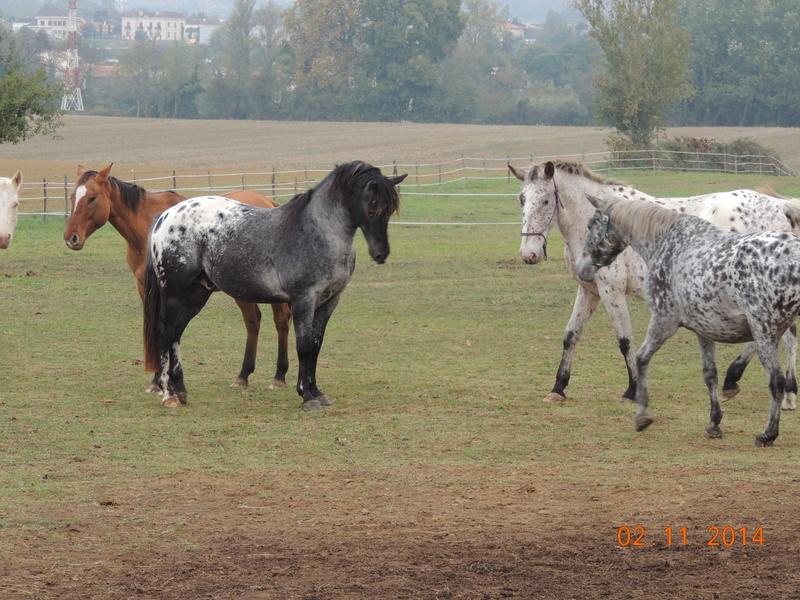 Les chevaux de l'Appaloosa IJ Farm - Page 4 02710