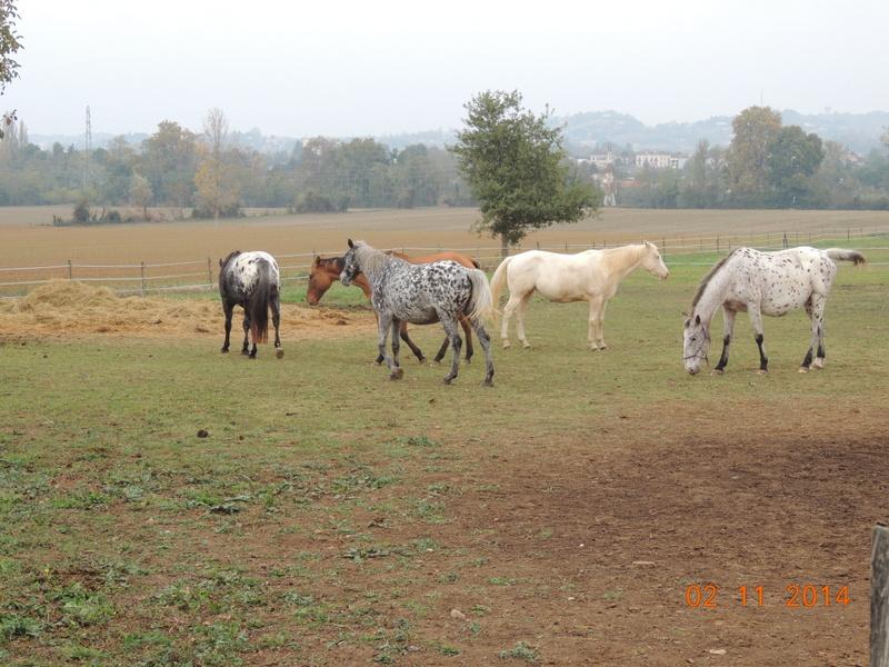 Les chevaux de l'Appaloosa IJ Farm - Page 4 02912