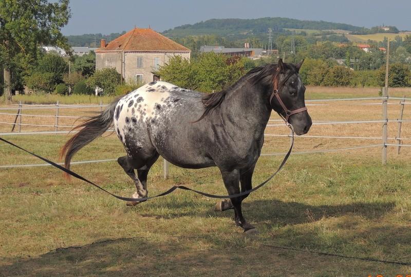 Les chevaux de l'Appaloosa IJ Farm - Page 3 03110