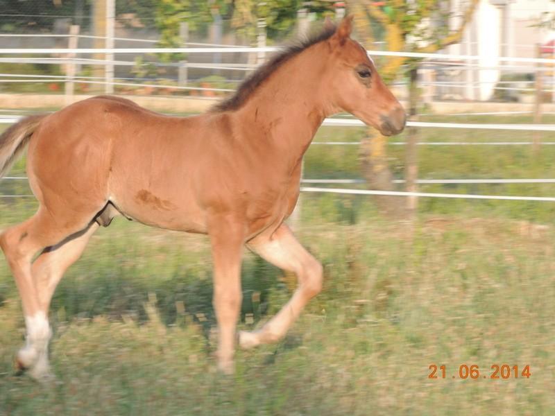 Les poulains né à l'Appaloosa IJ Farm - Page 2 03310
