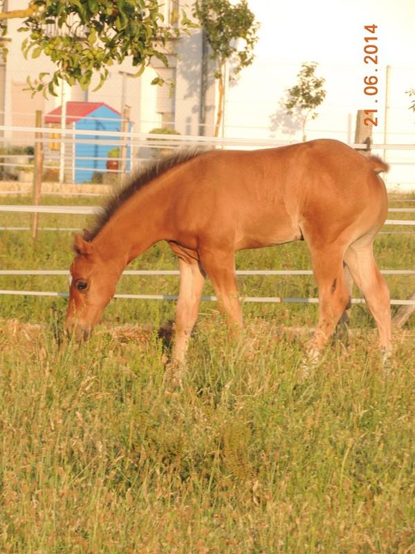 Les poulains né à l'Appaloosa IJ Farm - Page 2 03810