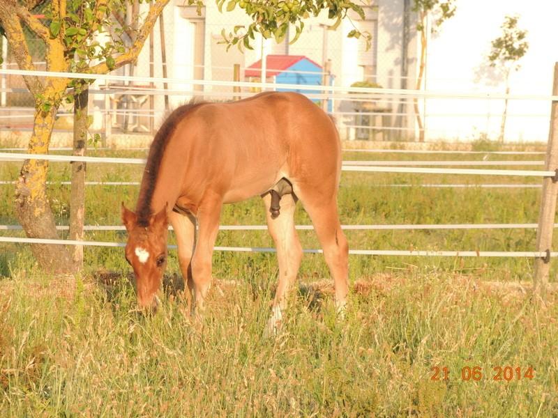 Les poulains né à l'Appaloosa IJ Farm - Page 2 03910
