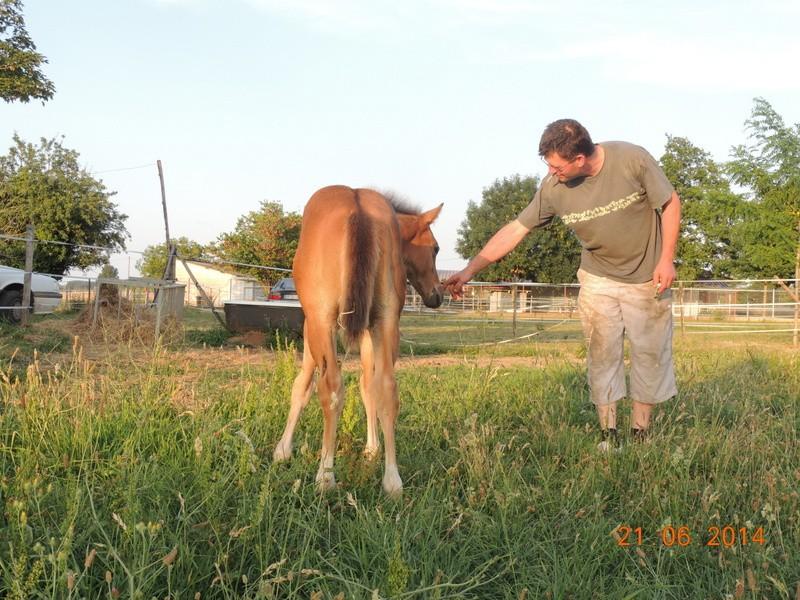 Les poulains né à l'Appaloosa IJ Farm - Page 2 08410