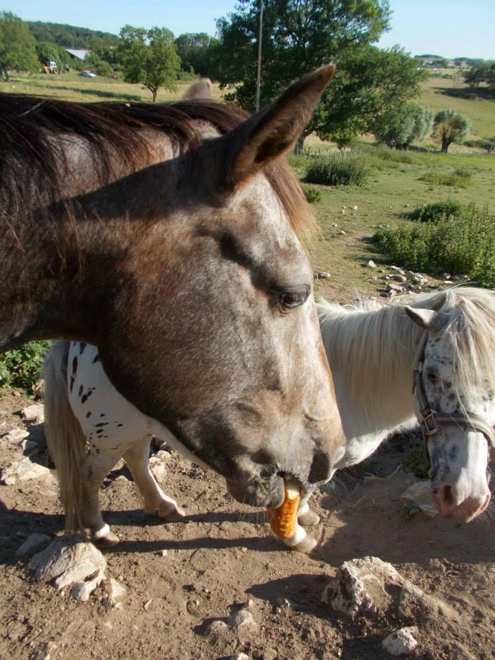 Mes chevaux, un mélange d'un peu tout le monde! - Page 10 10329210