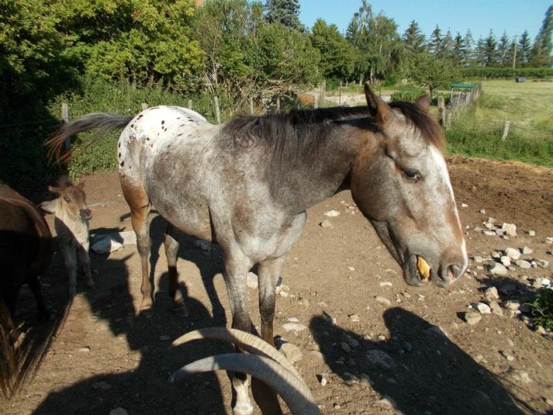 Mes chevaux, un mélange d'un peu tout le monde! - Page 10 10389910