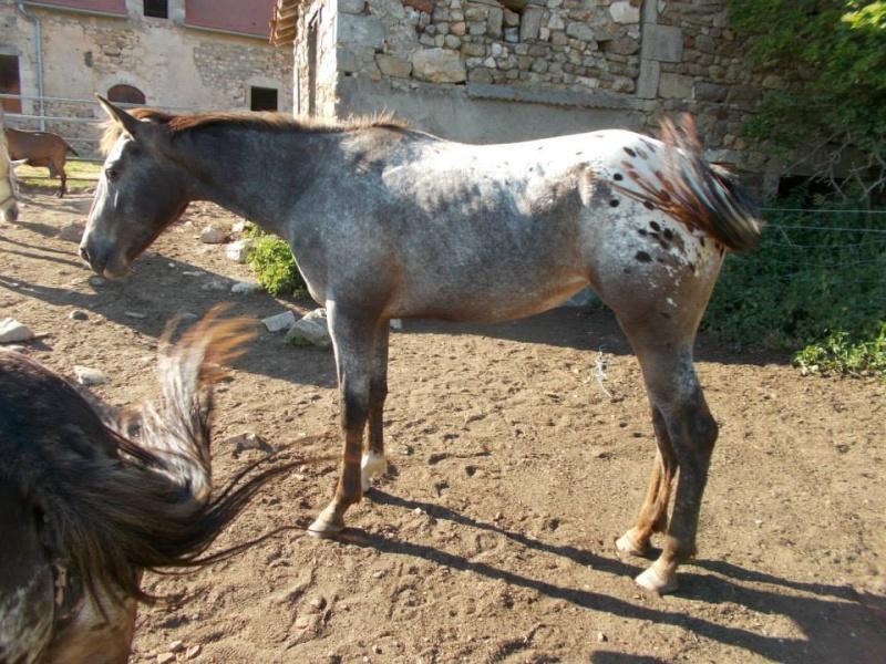 Mes chevaux, un mélange d'un peu tout le monde! - Page 10 64686_10