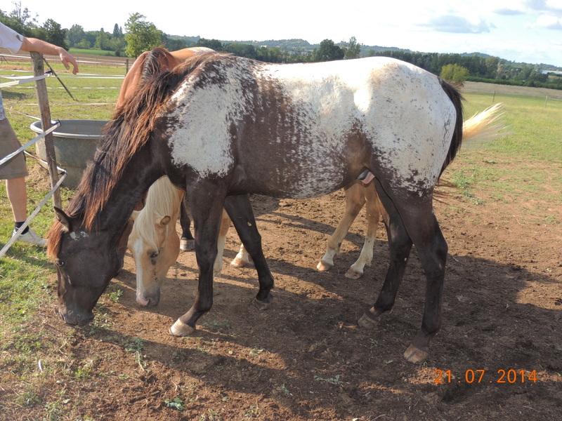 Les poulains né à l'Appaloosa IJ Farm - Page 3 Dodge_29