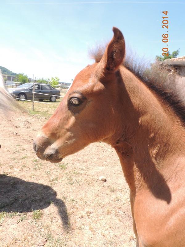 Les poulains né à l'Appaloosa IJ Farm - Page 2 Equali12