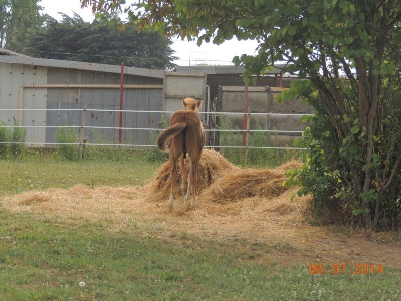 Les poulains né à l'Appaloosa IJ Farm - Page 3 Equali21