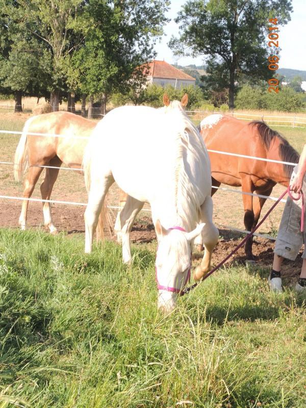 Les chevaux de l'Appaloosa IJ Farm - Page 2 Glitte11