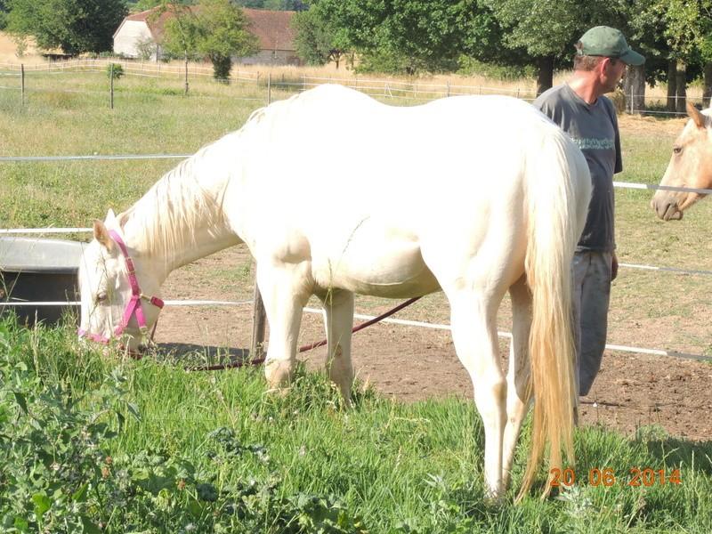 Les chevaux de l'Appaloosa IJ Farm - Page 2 Glitte12