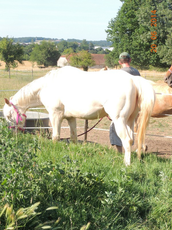 Les chevaux de l'Appaloosa IJ Farm - Page 2 Glitte13