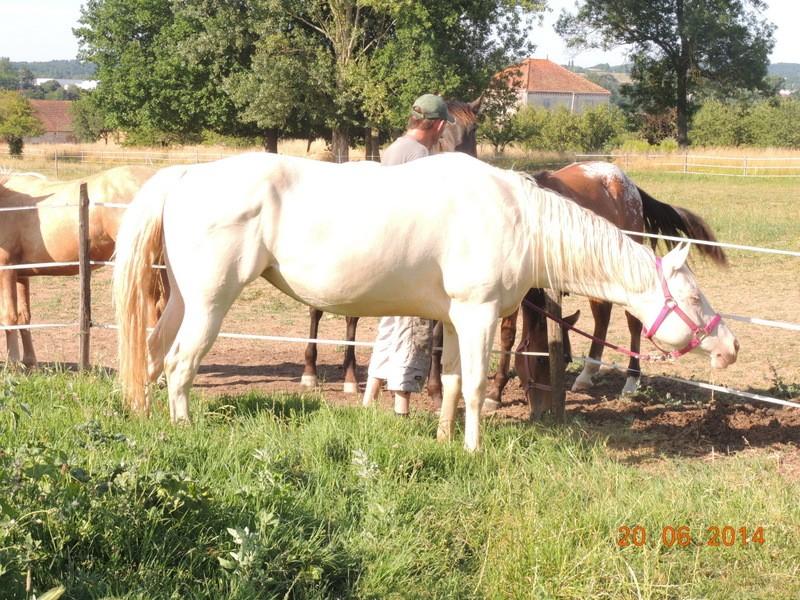 Les chevaux de l'Appaloosa IJ Farm - Page 2 Glitte14