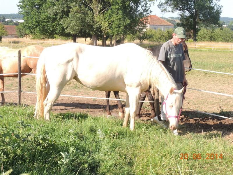 Les chevaux de l'Appaloosa IJ Farm - Page 2 Glitte15