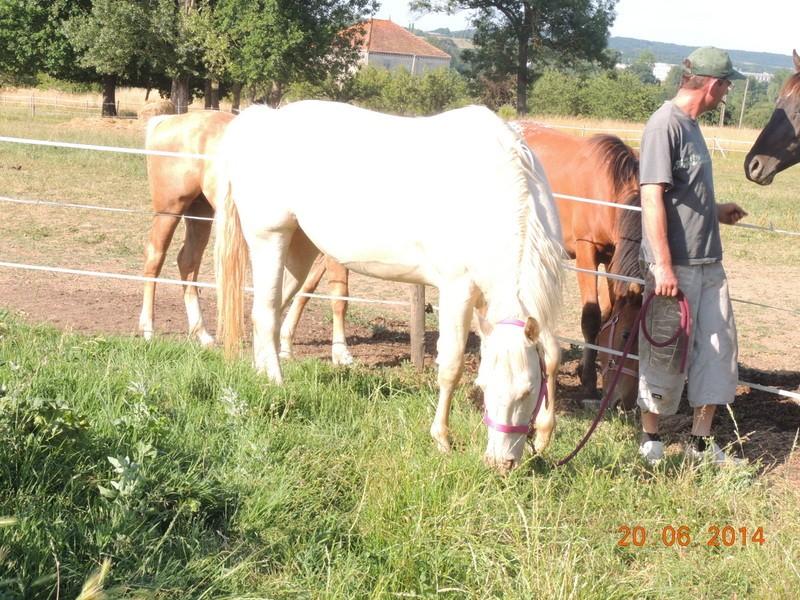 Les chevaux de l'Appaloosa IJ Farm - Page 2 Glitte16