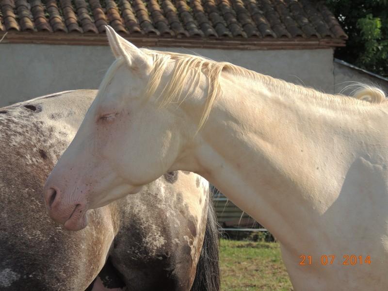 Les chevaux de l'Appaloosa IJ Farm - Page 3 Glitte20