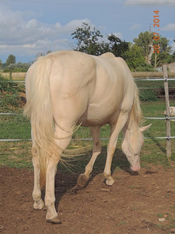 Les chevaux de l'Appaloosa IJ Farm - Page 3 Glitte21