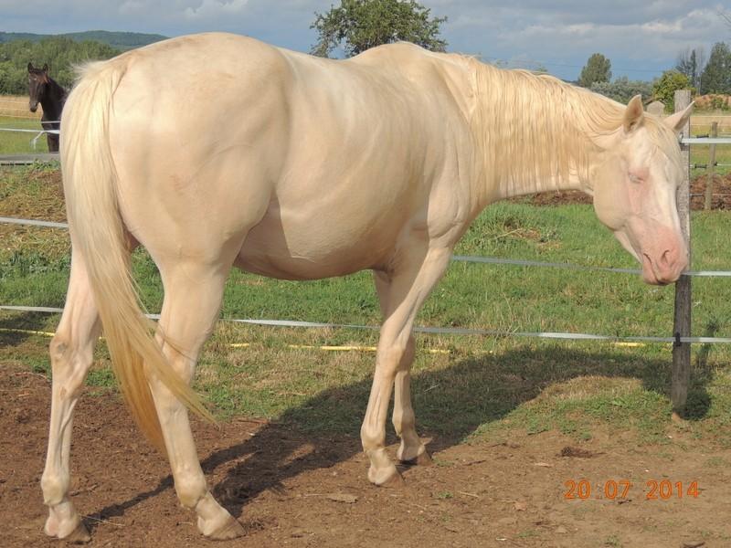 Les chevaux de l'Appaloosa IJ Farm - Page 3 Glitte22