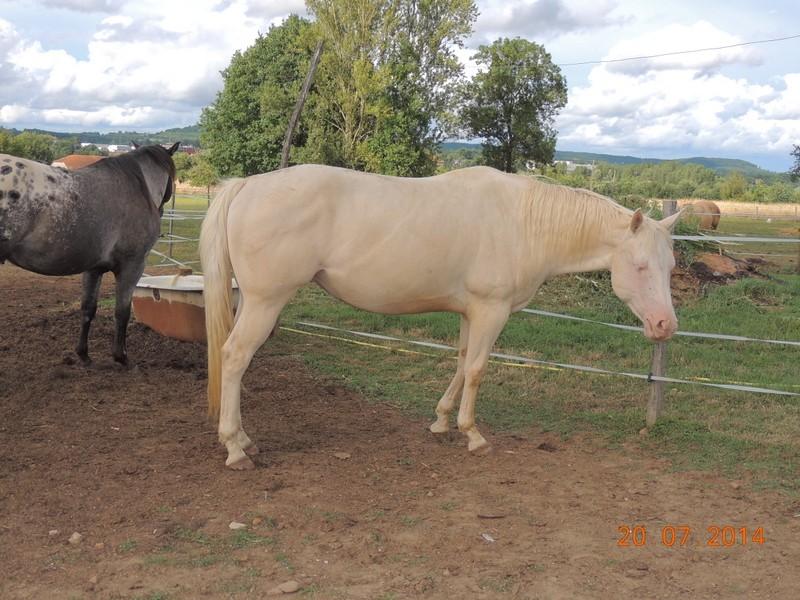 Les chevaux de l'Appaloosa IJ Farm - Page 3 Glitte23