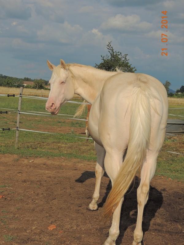 Les chevaux de l'Appaloosa IJ Farm - Page 3 Glitte24