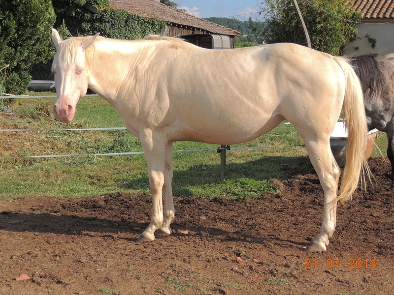Les chevaux de l'Appaloosa IJ Farm - Page 3 Glitte25