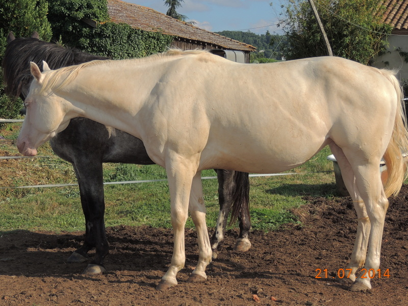 Les chevaux de l'Appaloosa IJ Farm - Page 3 Glitte26