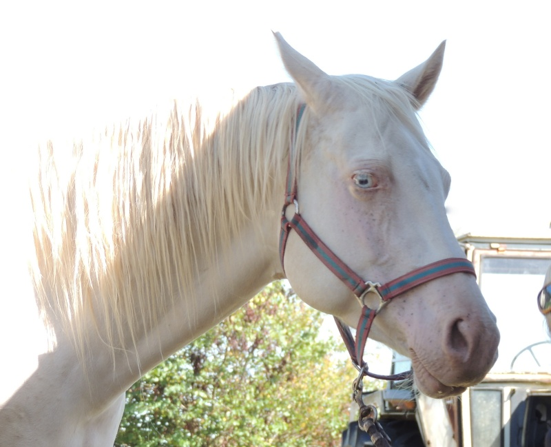 Les chevaux de l'Appaloosa IJ Farm - Page 3 Glitte27