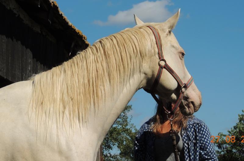 Les chevaux de l'Appaloosa IJ Farm - Page 3 Glitte28