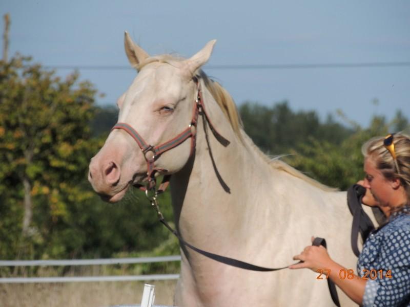 Les chevaux de l'Appaloosa IJ Farm - Page 3 Glitte29