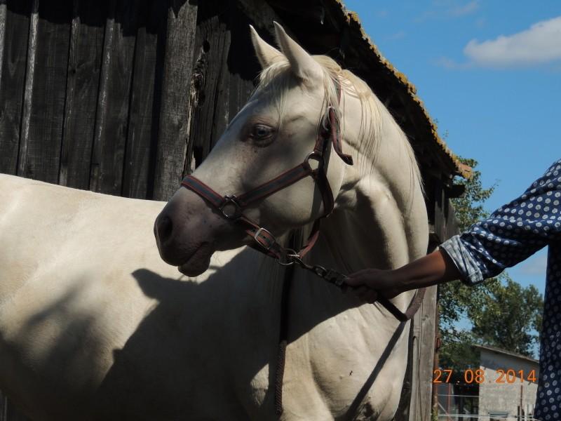 Les chevaux de l'Appaloosa IJ Farm - Page 3 Glitte30
