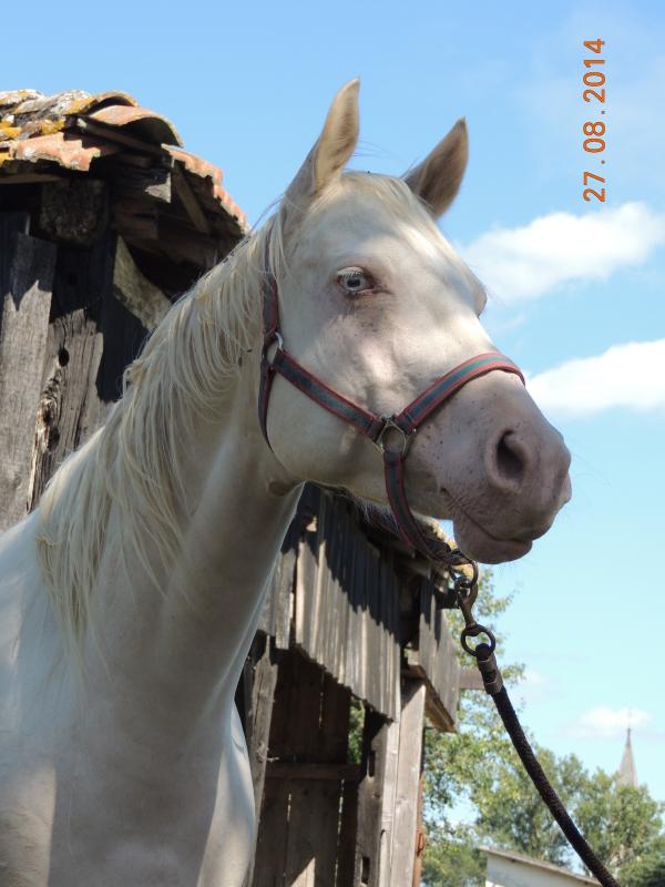 Les chevaux de l'Appaloosa IJ Farm - Page 3 Glitte31
