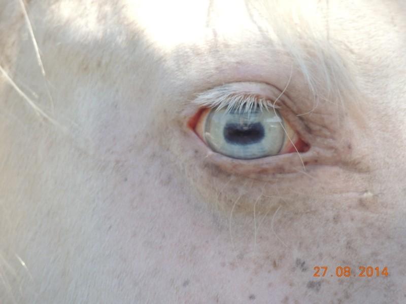 Les chevaux de l'Appaloosa IJ Farm - Page 3 Glitte32