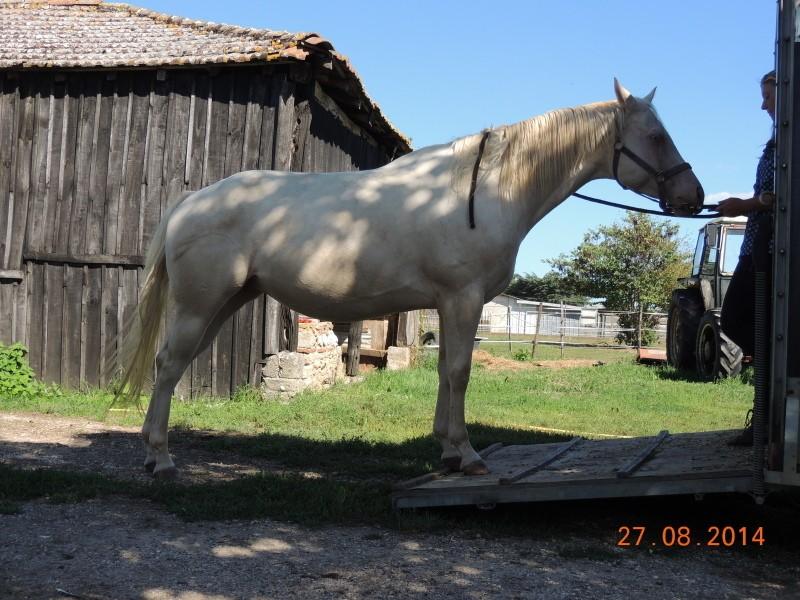 Les chevaux de l'Appaloosa IJ Farm - Page 3 Glitte33