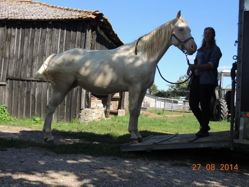 Les chevaux de l'Appaloosa IJ Farm - Page 3 Glitte34