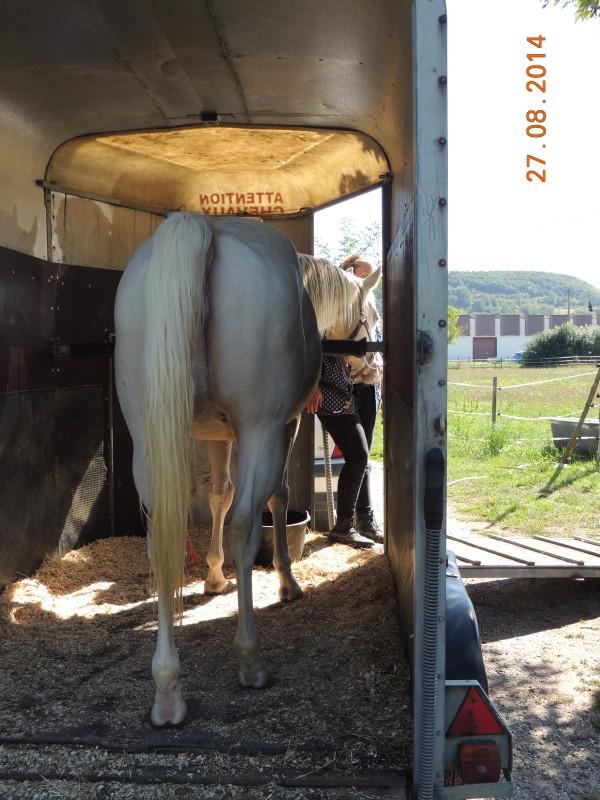 Les chevaux de l'Appaloosa IJ Farm - Page 3 Glitte35