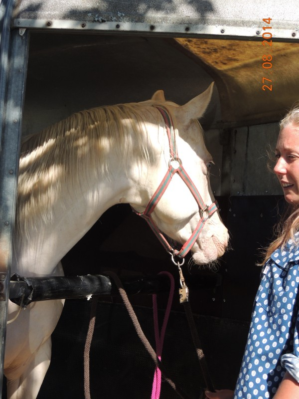 Les chevaux de l'Appaloosa IJ Farm - Page 3 Glitte36