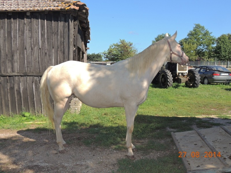 Les chevaux de l'Appaloosa IJ Farm - Page 3 Glitte37