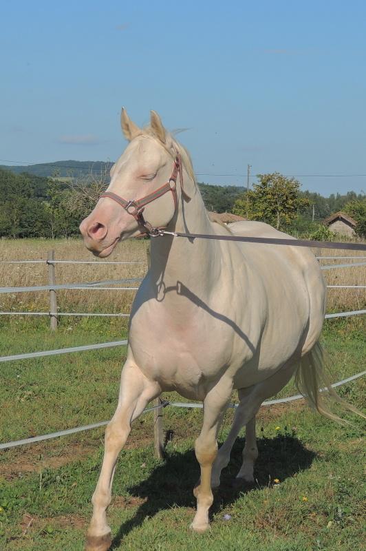 Les chevaux de l'Appaloosa IJ Farm - Page 3 Glitte39