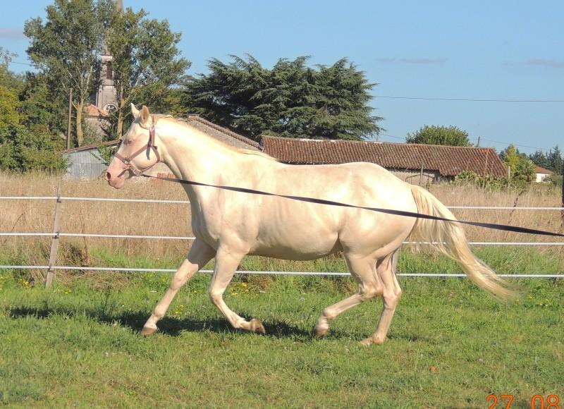Les chevaux de l'Appaloosa IJ Farm - Page 3 Glitte40