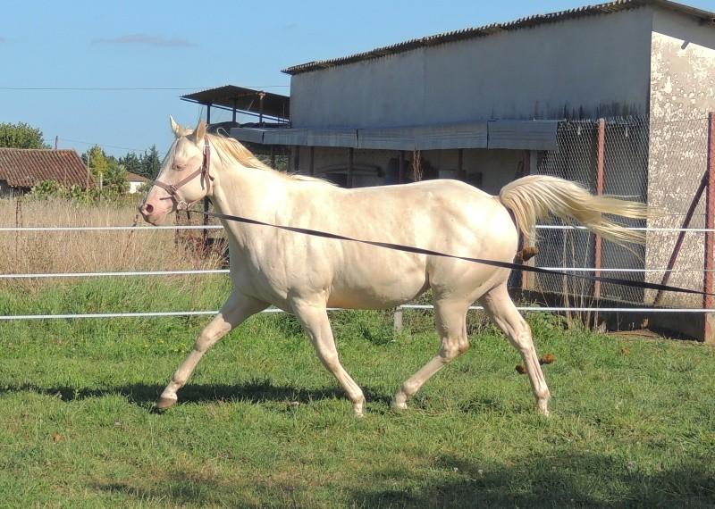 Les chevaux de l'Appaloosa IJ Farm - Page 3 Glitte41