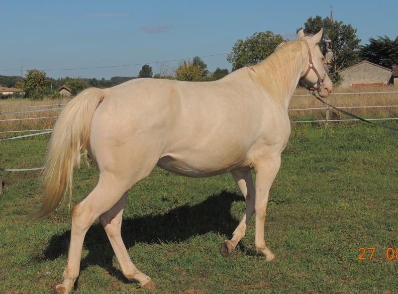 Les chevaux de l'Appaloosa IJ Farm - Page 3 Glitte42