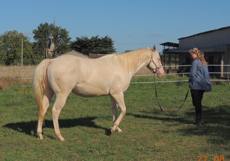 Les chevaux de l'Appaloosa IJ Farm - Page 3 Glitte43