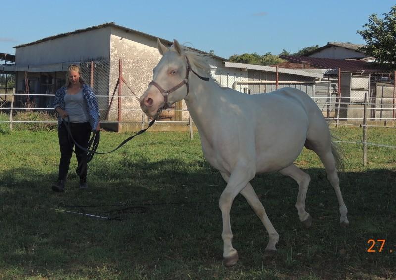 Les chevaux de l'Appaloosa IJ Farm - Page 3 Glitte44