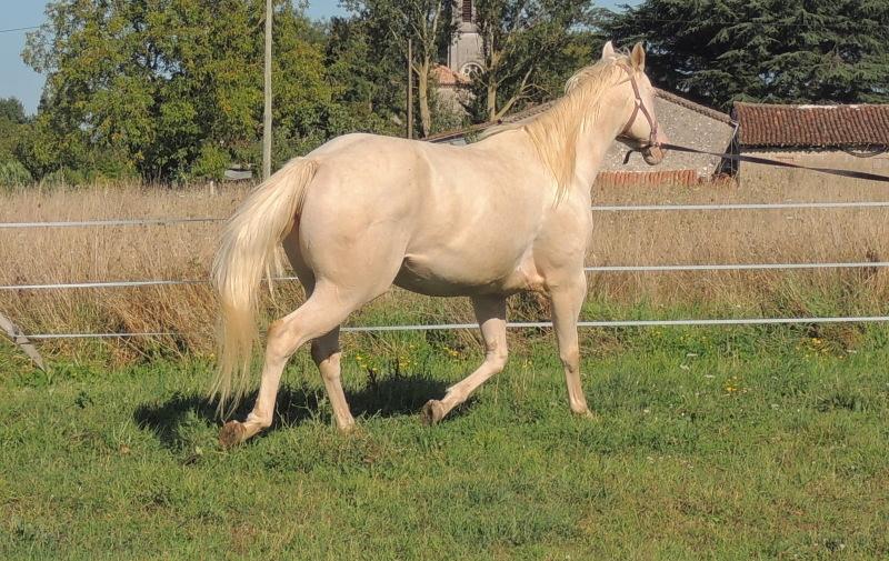 Les chevaux de l'Appaloosa IJ Farm - Page 3 Glitte45