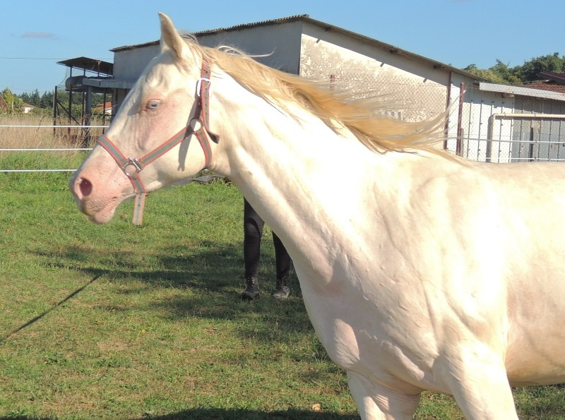 Les chevaux de l'Appaloosa IJ Farm - Page 3 Glitte46